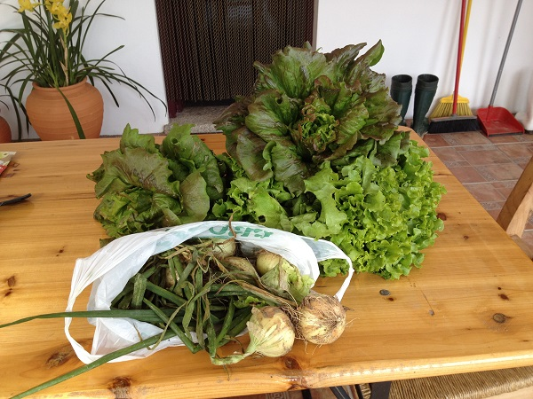 A bag of onions and some lettuce from our neighbours as a welcome gift